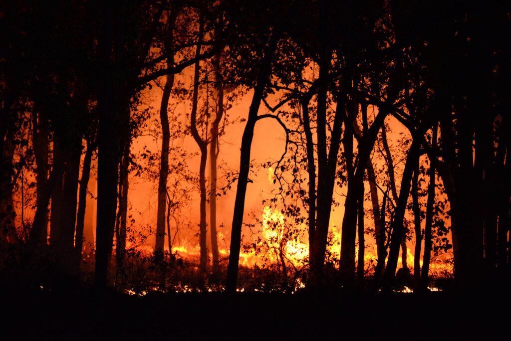 Dall'incendio al pellet sull'Isola dei Canguri in Australia